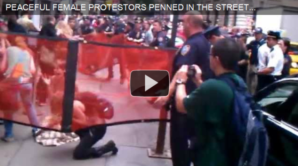 occupy wall street maced protestor
